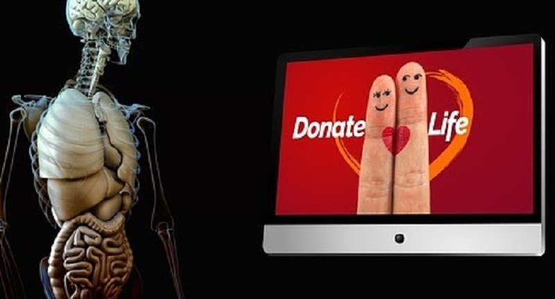 Трансплантація в Польщі: щорічно близько 500 операцій із пересадки органів